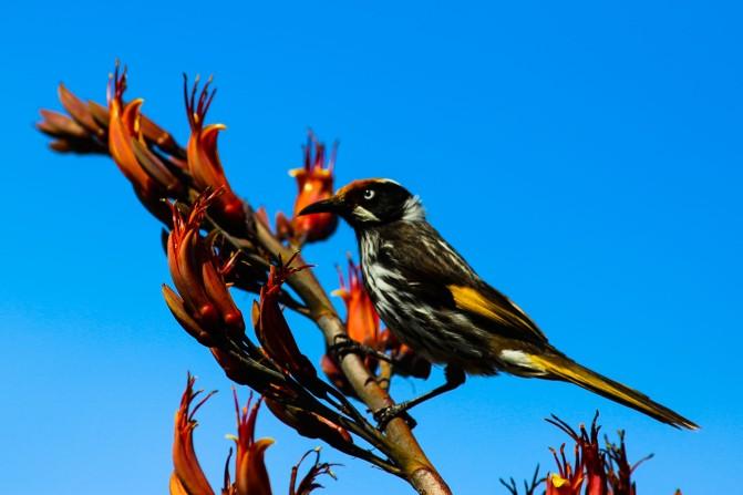 wildbird-australia